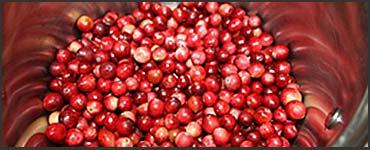cranberries-370x150