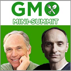 GMO Mini Summit